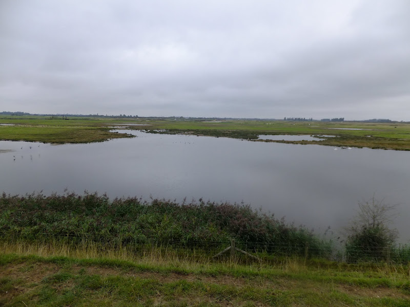 Fosdyke Marsh Nature Reserve