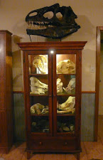 Skull collection at the lodge