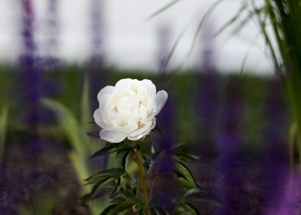 Vw Garden August 2011