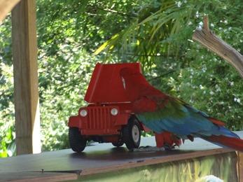 2017.06.17-031 spectacle de perroquets
