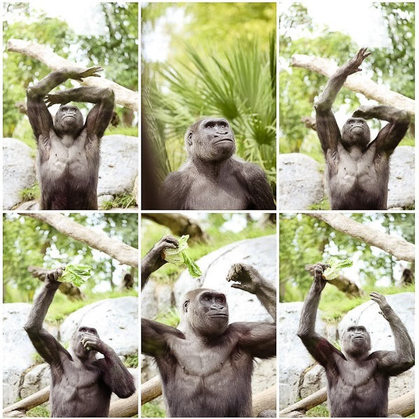 gorillax6