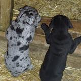 Gretta & Cobalt Blues 3/24/12 litter - SAM_3417.JPG