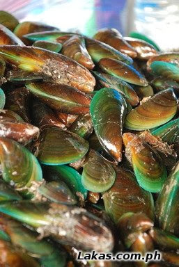 Tahong (Asian Green Mussel)