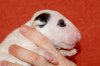 White boy eye patch - 3 weeks old