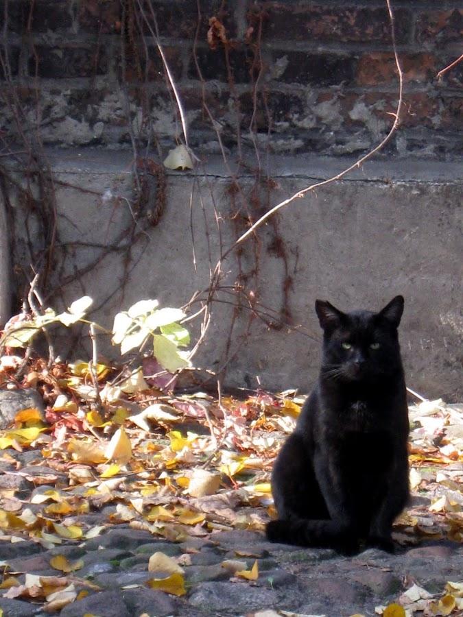 kot strażnik Księżego Młyna