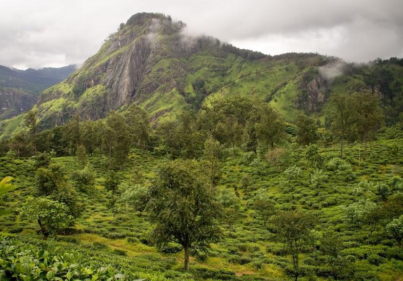 146aadb390c303 5 Reasons to Visit Sri Lanka Hill Country