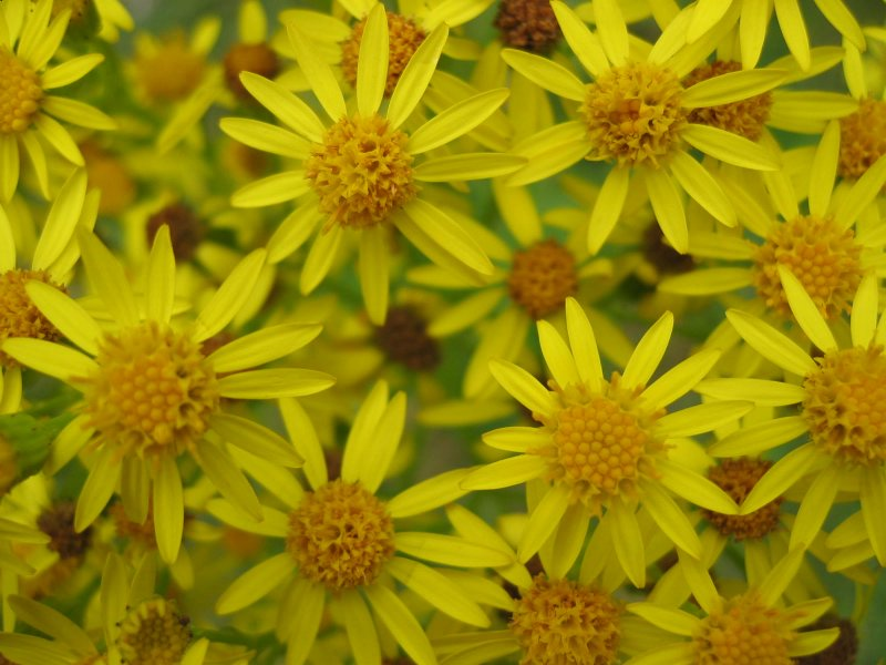 yellow flowers detail