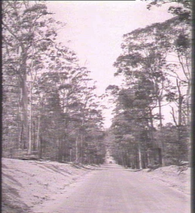 jervis-bay-road-from-the-collections-of-the-State-Library-of-New-South-Wales.