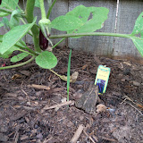Gardening 2010, Part Two - 101_2940.JPG