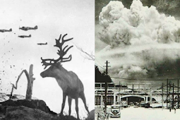 10 Of The Most Fascinating, The Least Known World War 2 Facts