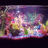 Fish - 100_6681.JPG