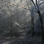 Zeisterbos December 2007 044.jpg
