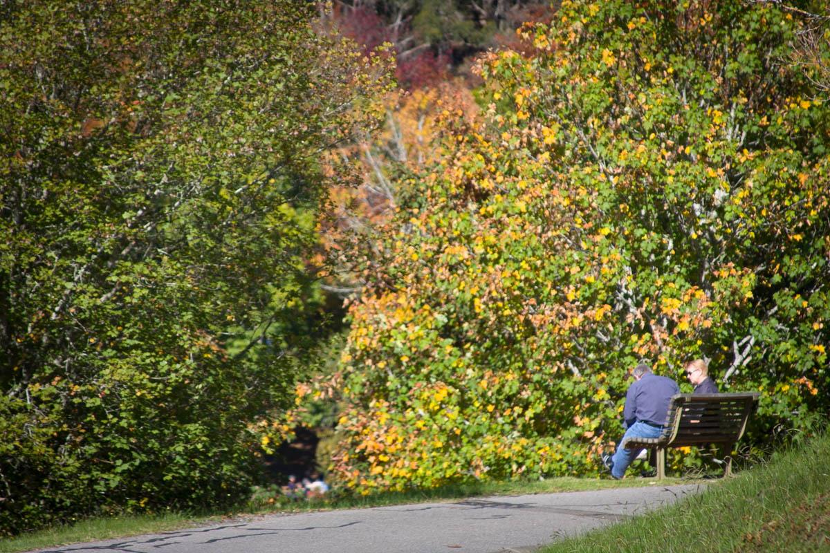 2011 04 25 Mt Lofty Botanic Garden - IMG_6549.jpg