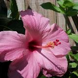 Gardening 2012 - 115_1730.JPG