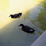 Houston Zoo - 116_8539.JPG