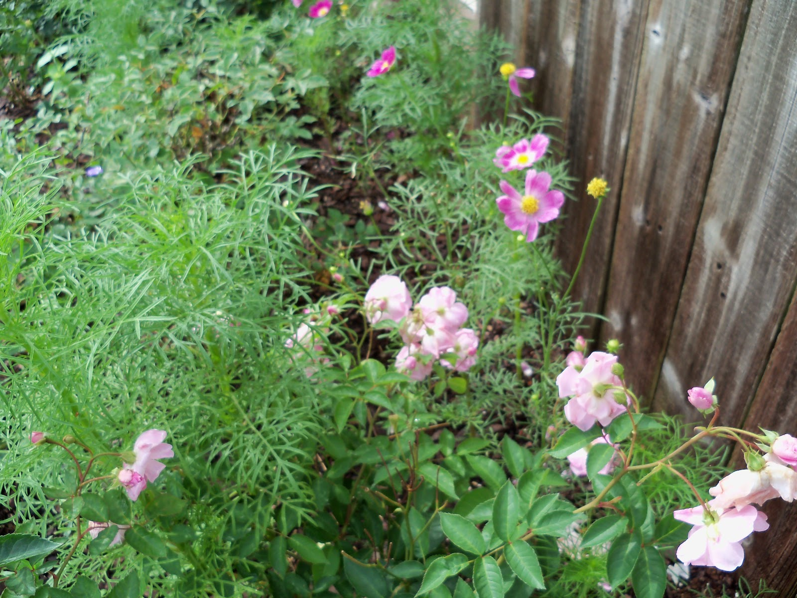 Gardening 2010, Part Two - 101_2172.JPG