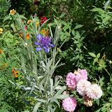 Gardening 2010, Part Three - 101_4468.JPG