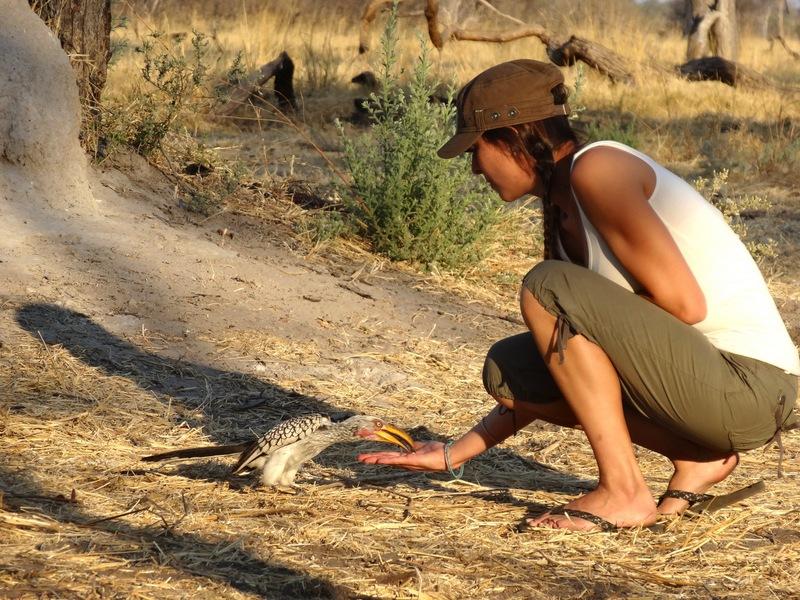 A friendly hornbill eats from Maria's hand