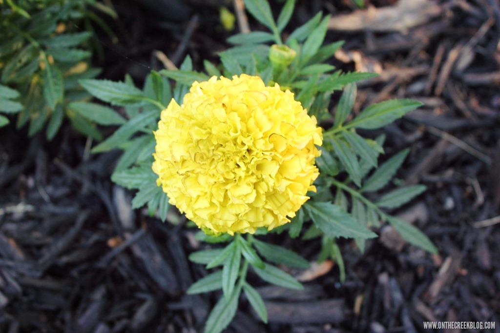 [flower12%5B10%5D]