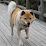 Yousuke Hiraishi's profile photo