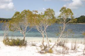 Fraser Island, Australia •October, 2009