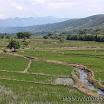 2014-08-19 10-34 Północne Peru - pola ryżowe.jpg