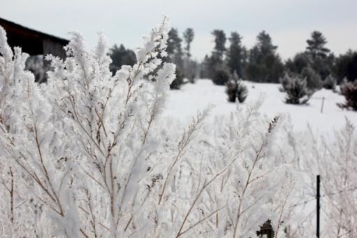 frost-2013-02-24-11-15.jpg