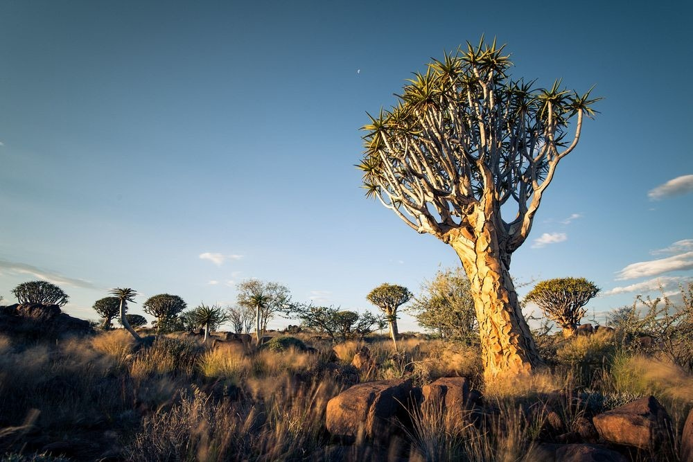 quiver-tree-forest-8