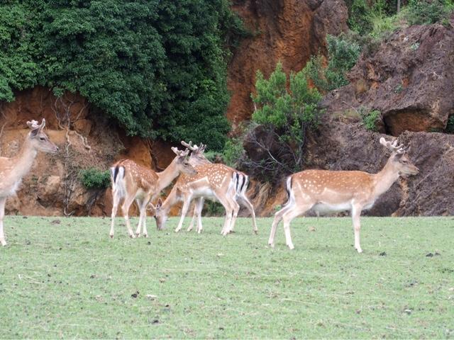 cabarceno.cantabria.ciervos.blog.viajes