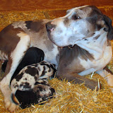 Savanna & her babies @ 2 weeks