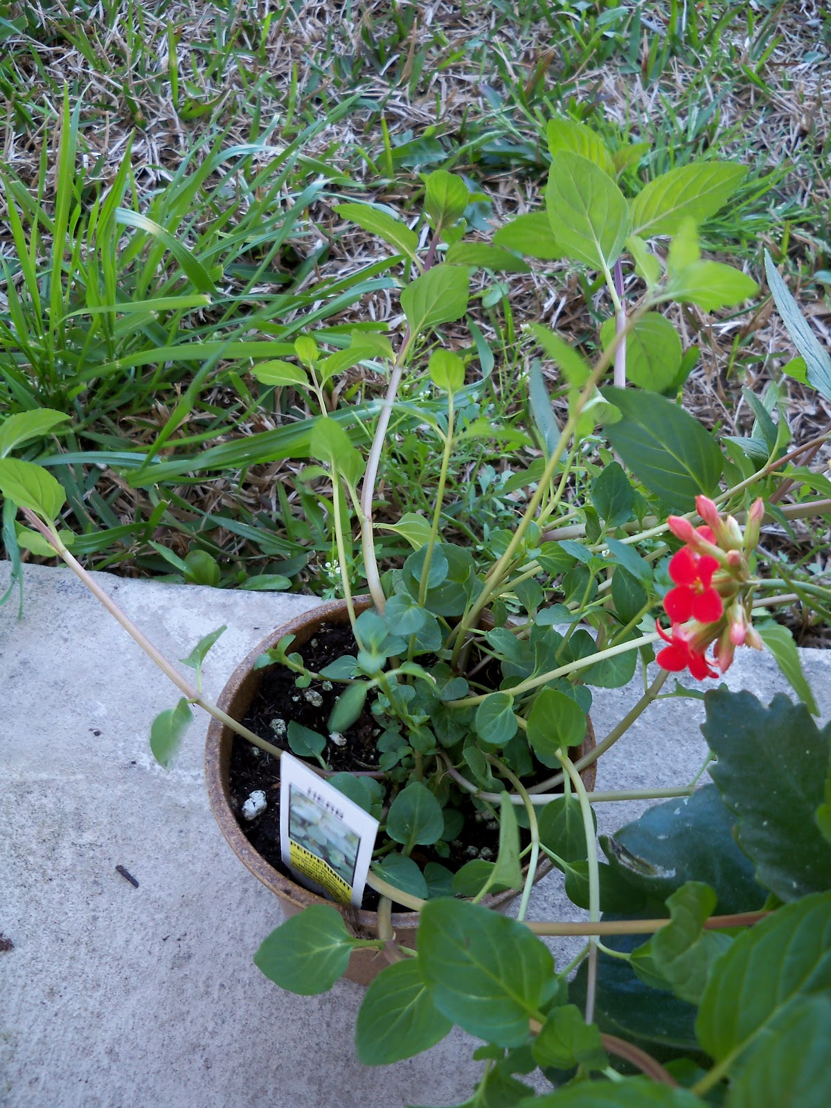Gardening 2010 - 101_0210.JPG