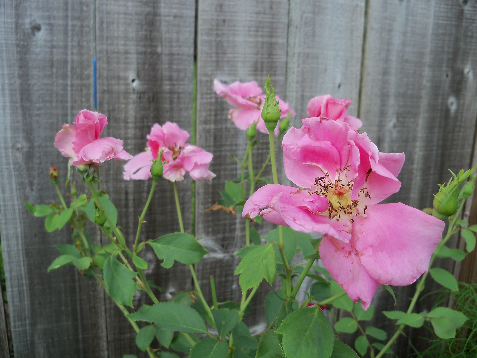 Gardening 2010, Part Three - 101_3555.JPG