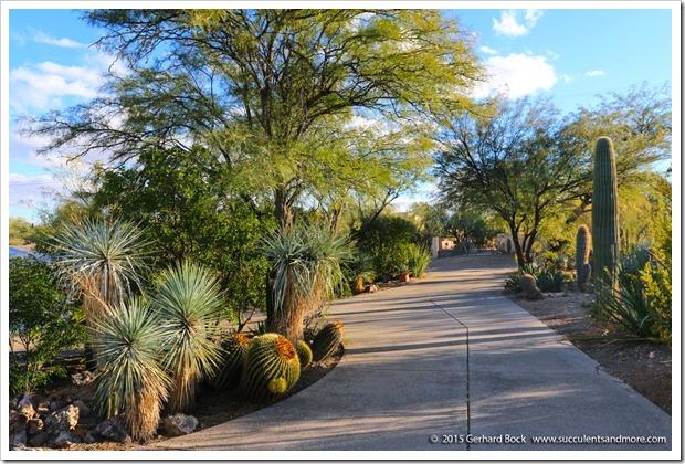 151229_Tucson_GregStarr_0088