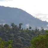 Los Cedros, 1400 m. Montagnes de Toisan, Cordillère de La Plata (Imbabura, Équateur), 19 novembre 2013. Photo : J.-M. Gayman