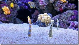 mini-enguias-oceanario-de-lisboa-4