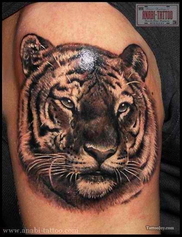 _realista_tigre