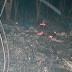 Corpo de idoso de 81 anos é encontrado carbonizado em Porto Velho