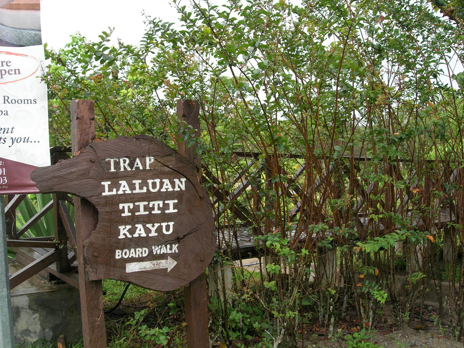 Sungai klah hot springs - Take A Healthy Morning Stroll On The Boardwalk