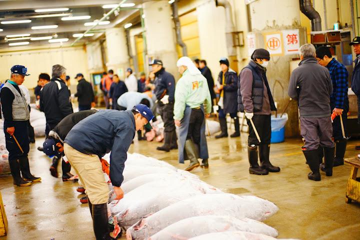 inspeccionando el atún en tsukiji