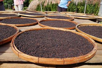 Photo: A visit to a pepper farm
