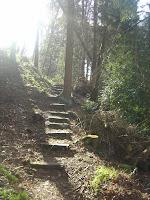 A wooded dell near Prestbury