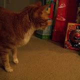 Christmas 2013 - 115_9774.JPG