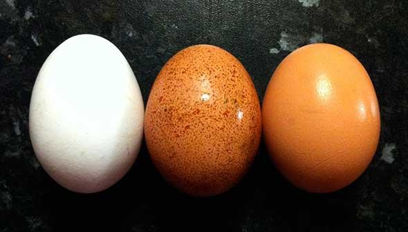 Egg colo
