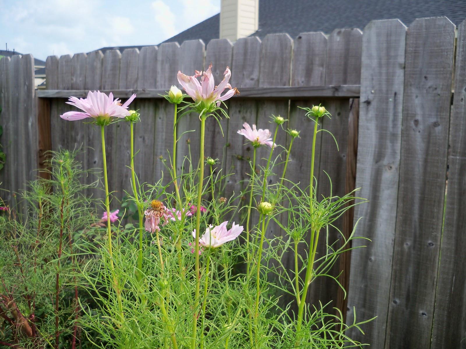 Gardening 2010, Part Three - 101_5181.JPG