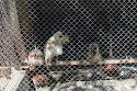kafeslerdeki ilginç kuşlar, Uluabat kuş cenneti