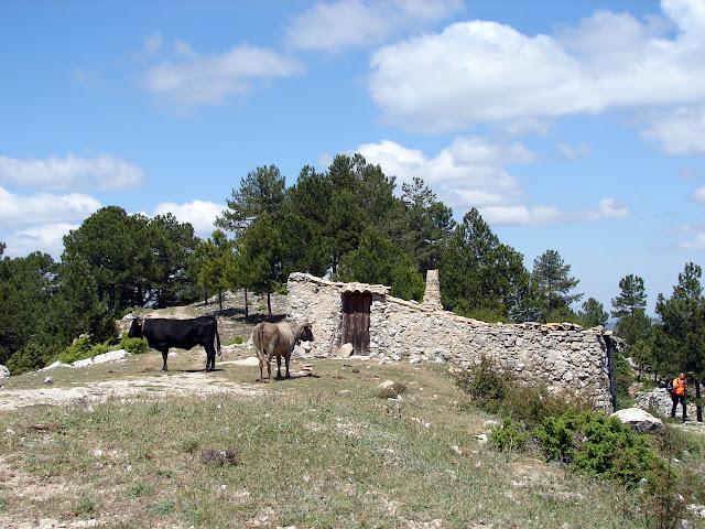 Senderismo - Argaret - Coscollosa - Gubies Capatx - Pas de Romeret - Parrisal