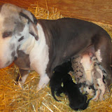Gemma & her babies @ 2 weeks