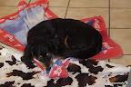 Das Handtuch gehört eigentlch dem Paco. Hat sich Marlon aber schnell einverleibt :-)