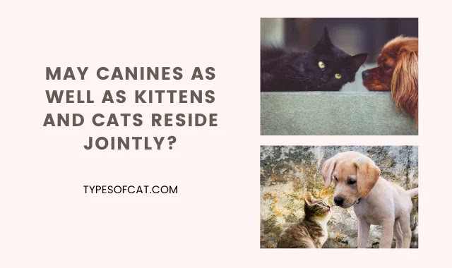 May Canines As well as Kittens and Cats Reside Jointly?