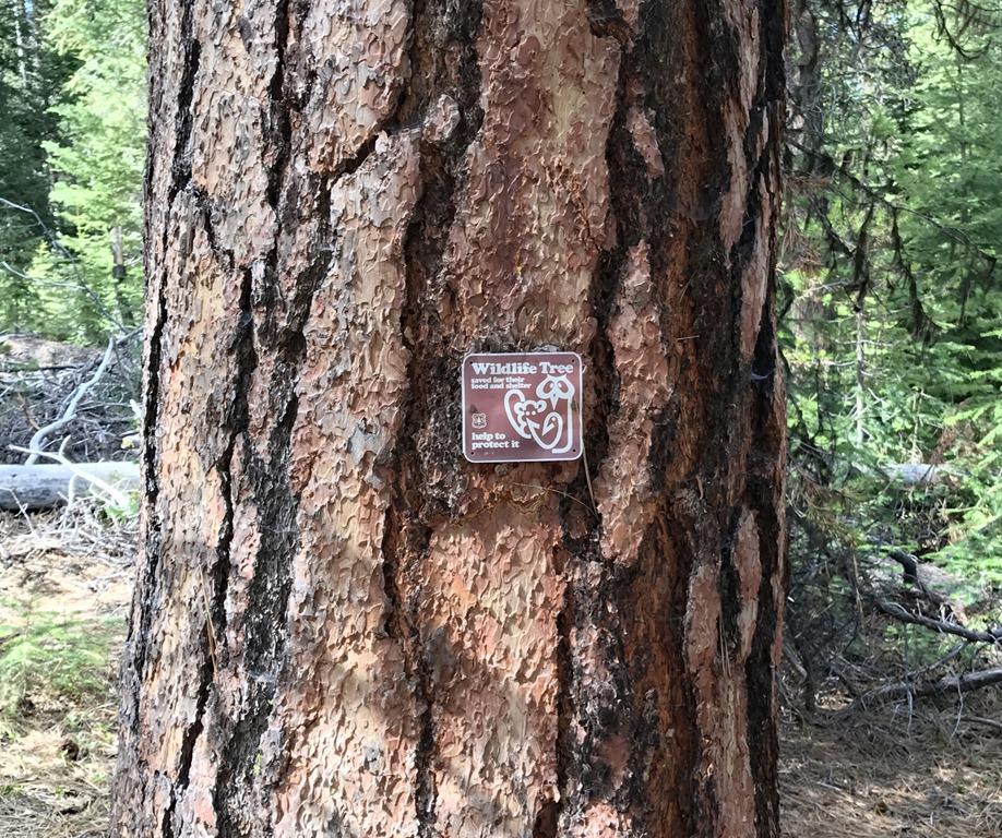 [La-Pine-OR16-4-May-20179]